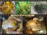Poulet rôti citron et romarin à la façon de jamie oliver