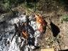 Gigot de sanglier à la broche (feu ouvert)