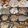 Poêlée de cèpes en persillade