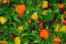 Salade colorée de chou chinois, chou rouge, mangue et carotte