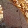 Carré d'agneau de lait des Pyrénées en croute de noix et de marrons du Périgord