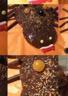 Gâteau araignée au chocolat