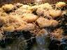 Gratin de pommes de terre et épinards