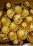 Minis clafoutis aux parfums variés