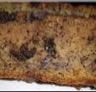 Pavé moelleux banane-chocolat