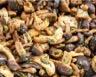 Poêlée de cèpes de Bordeaux