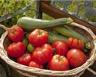Tarte courgettes tomates et jambon