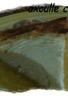 Tarte crémeuse au fromage blanc et gruyère