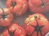 Tomates farcies poulet gruyère persil