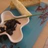 Verrines ou petites coupelles: mousse de thon et tartare de betteraves à la coriandre