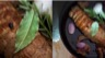 Filet mignon farci au foie gras airelles et poivre de sichuan